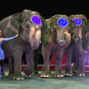 elephant-style-head-pc-edit