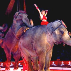 red-elephant-2