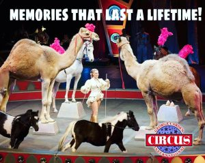 Camels and horses racing around circus ring at Garden Circus